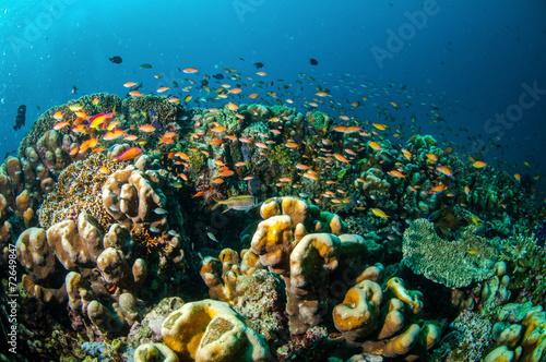 Poster Coral reefs Coral reef, fishes in Gili Lombok Nusa Tenggara Barat underwater