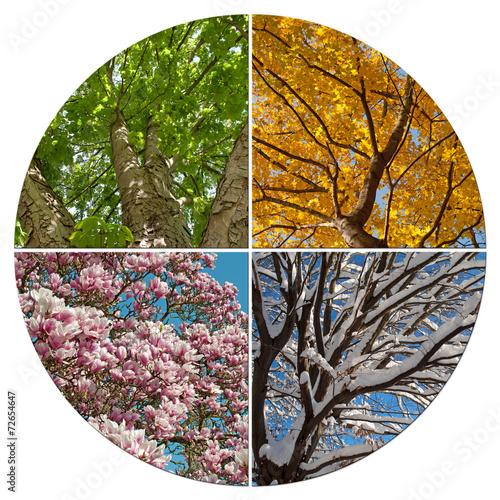 Foto op Plexiglas Magnolia Vier Jahreszeiten