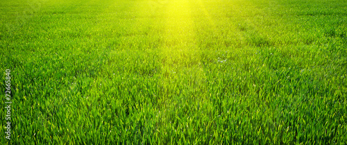 Foto op Plexiglas Gras Green lawn for background