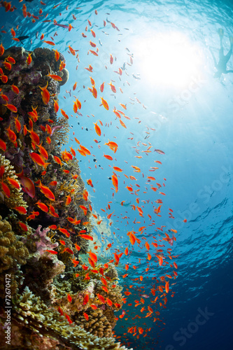 Tuinposter Koraalriffen Red Sea