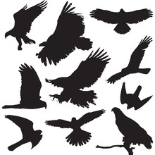 Raptors Vector Illustrations S...