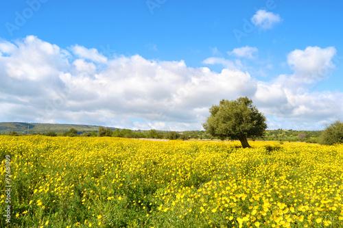 plakat Panorama con Prato Fiorito - Albero.