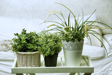 House Plants On The White Bedr...