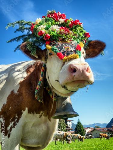 Photo Stands Cow almabtrieb