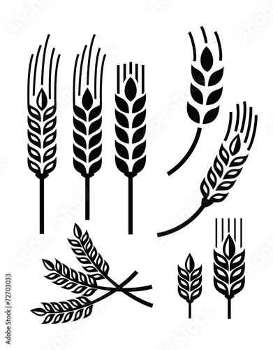 Fotografía wheat icon