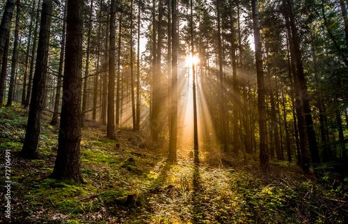 Fotografie, Obraz  Sonnenlicht