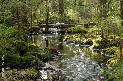 Foto Streaming creek in a mossy forest