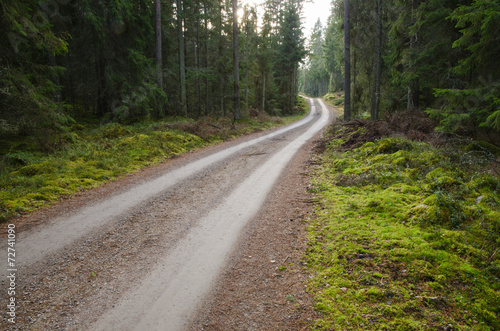 Tuinposter Weg in bos Green environment with a winding gravel road