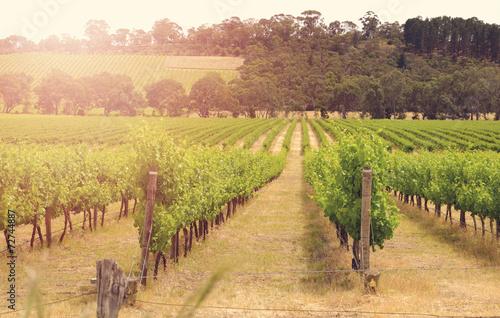 Canvas Prints Vineyard Rows of grapevines taken at Australia's McLaren Vale