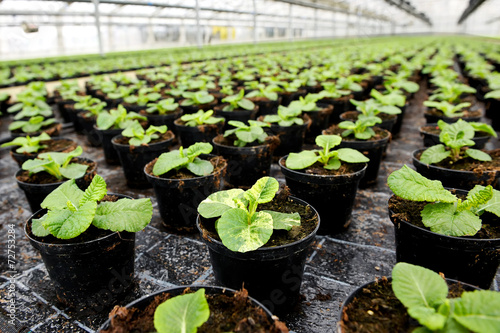 Obraz Plants being cultivated in a hothouse - fototapety do salonu