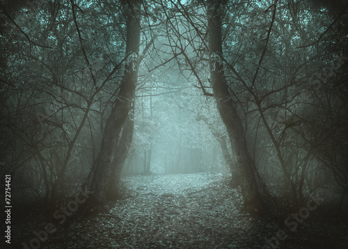 Printed kitchen splashbacks Khaki Blue light in a tunnel. Mist in the forest