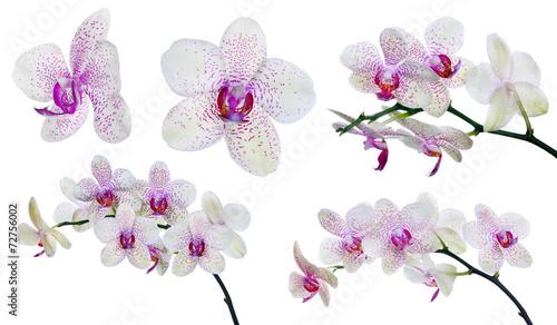 kolekcja-izolowanych-lekkie-kwiaty-orchidei-w-rozowe-plamy