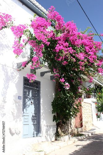 greek white house with blue painted door and purple Bougainvillea