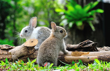 Two Rabbits Bunny In The Garden