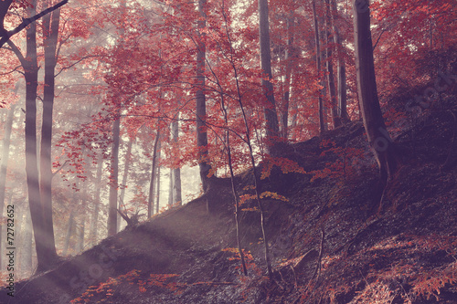 Tuinposter Crimson Sunrise on the forest slope