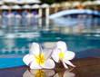 flower on swimming pool