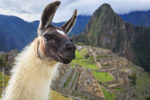 Poster Lama Machu Picchu, Peru, UNESCO World Heritage Site. One of the New S