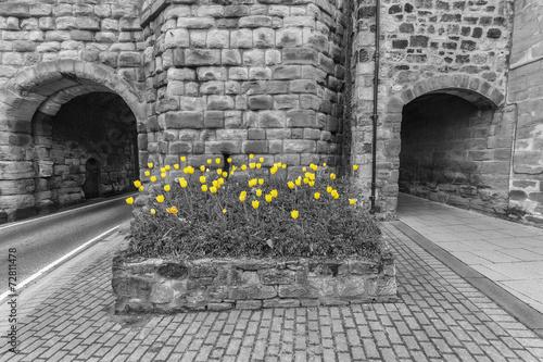 Obraz w ramie Yellow Tulips