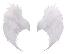 White Birds Wing Feather,pluma...