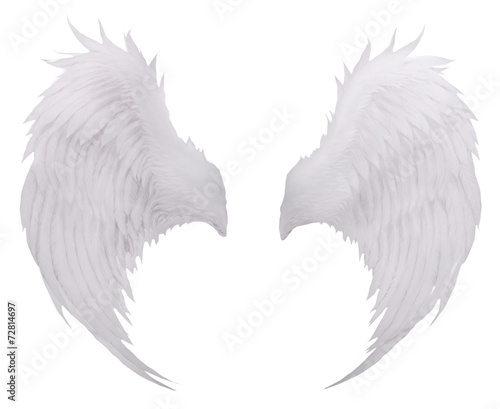 white birds wing feather,plumage isolated white background use f Wall mural