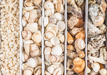 Seashells Collection, Background, Top View.Beach Decoration.