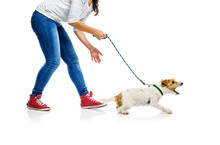 Dog On Lead On Walk With His O...