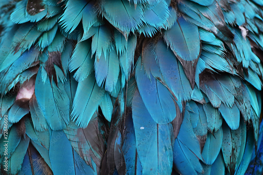 Fototapety, obrazy: Colorful feathers