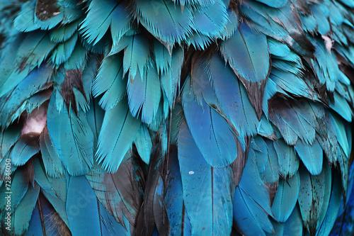Fond de hotte en verre imprimé Perroquets Colorful feathers