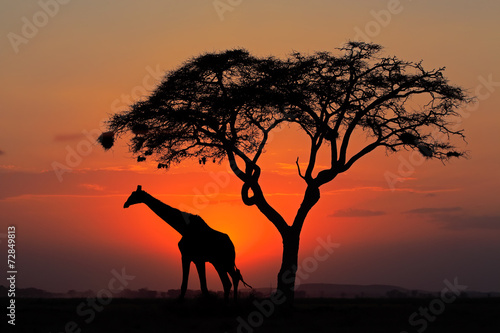 Silhouetted tree and giraffe against a red sunset