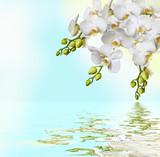 Piękne białe orchidee