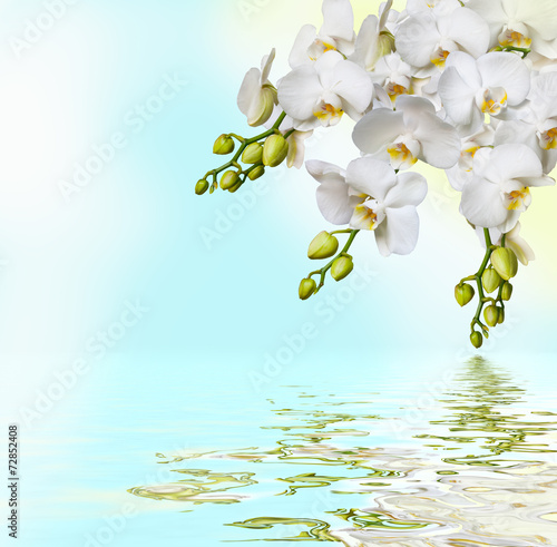 Fototapety, obrazy: Beautiful white orchid