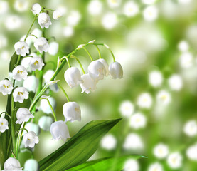 Obraz lily of the valley