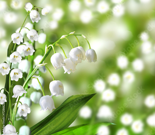 Tuinposter Lelietje van dalen lily of the valley