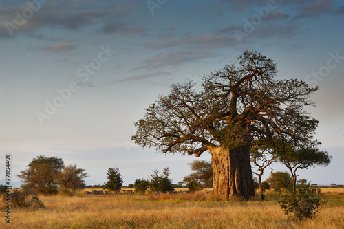 Photo Stands Baobab African landscape