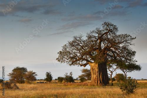 Staande foto Baobab African landscape