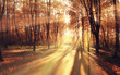 light rays fall landscape trees