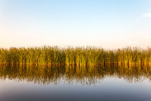 River With Reed In Friesland, ...