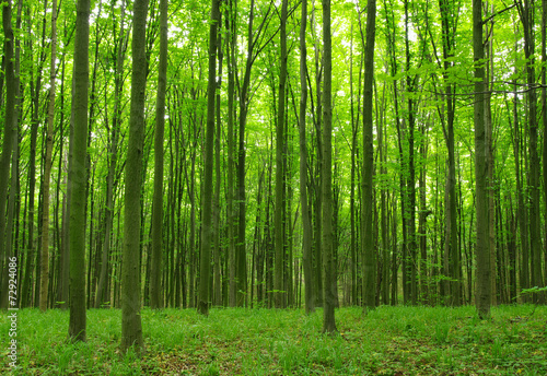 Trees #72924086