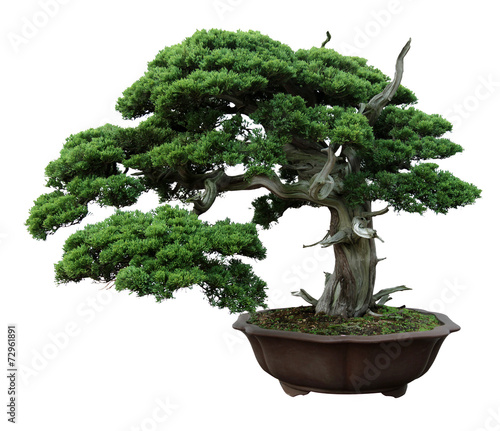 Foto op Canvas Bonsai Green potted plants in the white background.