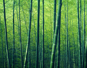 Panel Szklany Bambus Bamboo Forest Trees Nature Concept