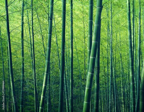 Photo sur Toile Bambou Bamboo Forest Trees Nature Concept