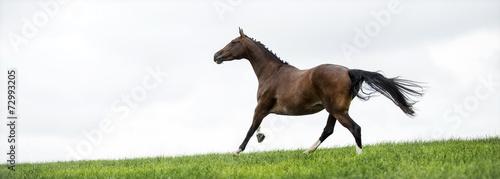 Cuadros en Lienzo Horses galloping in a field