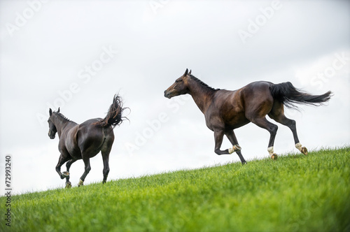 Fotografía  Horses galloping in a field