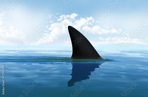 Fotografía  Aleta de tiburón fuera del agua