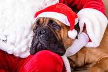 Santa Claus With Dog