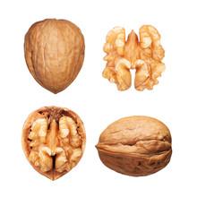 Walnuts Set Isolated On White