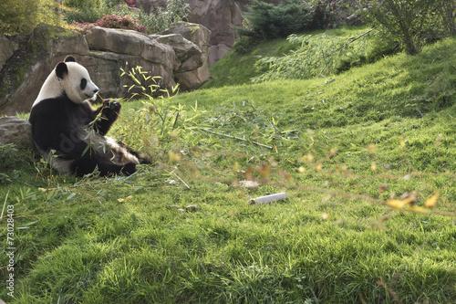 Stickers pour portes Panda panda géant // giant panda