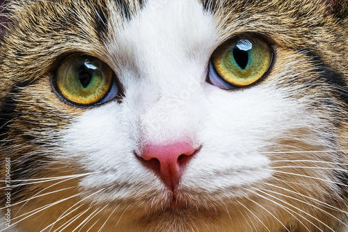 a cat portrait close up Poster
