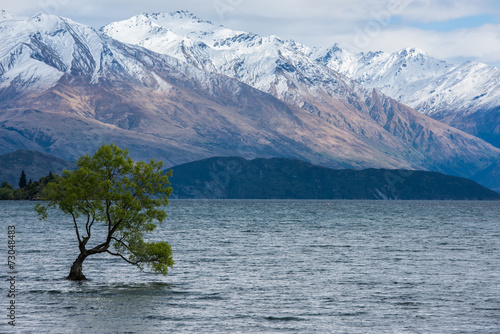 Poster Nouvelle Zélande Willow tree in Wanaka lake