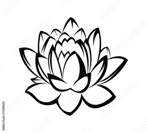 Lotus #73081623